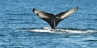 Go whale watching and stay at Portola Hotel