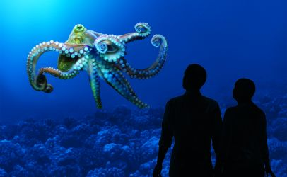 visit the Monterey Aquarium near Portola Hotel & Spa
